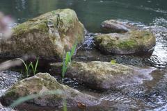 berny sur noye plan d'eau